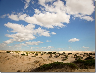 The Dunes at Birubi, Seem to Stretch on Forever
